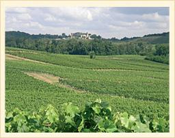 The vineyards at Chateau Pilet in Bordeaux.